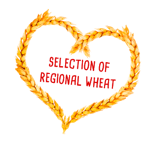 Selection of regional wheat